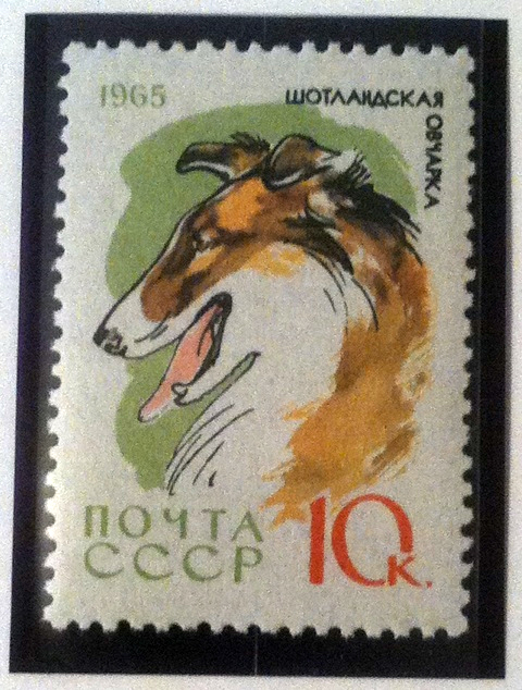 Russian stamp with collie head.